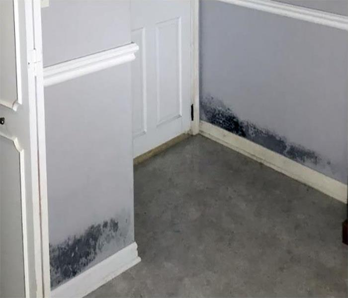 mold growing on the wall in a bedroom